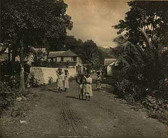 d_0002241_gordon_town_jamaica.jpg