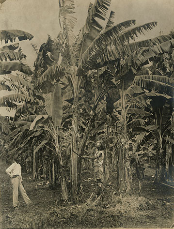 d_0007807_two_men_in_banana_plantation.jpg