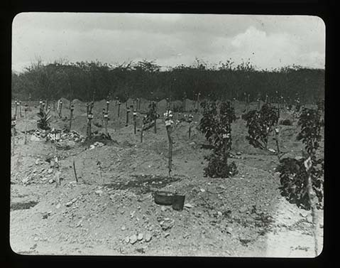 d_0007764_new_cemetery_earthquake_victims.jpg