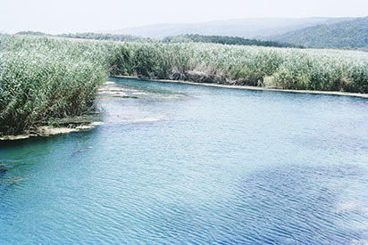 d_0007063_milk_river_alligator_pond_long_bay_swamp.jpg