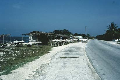 d_0006579_coral_vendors_beside_a1_highway.jpg