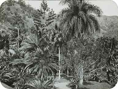 d_0005622_slide_9_castleton_gardens.jpg