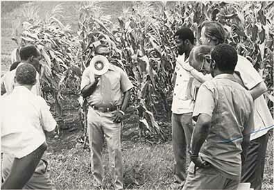 d_0007870_corn farming.jpg