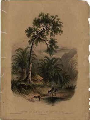 d_0002350_sketch_bamboos_cotton_tree_2.jpg