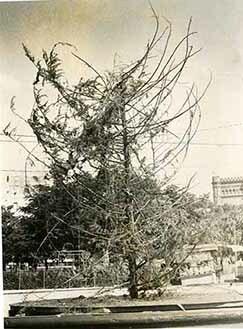 d_0005290_christmas_tree_remains.jpg