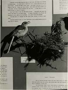 http://nlj.gov.jm/Digital-Images/d_0002921_nightingale.jpg