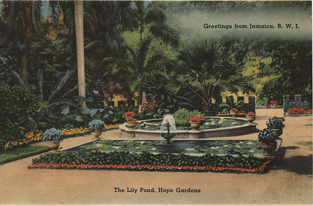 d_0004727_the_lily_pond_hope_gardens.jpg