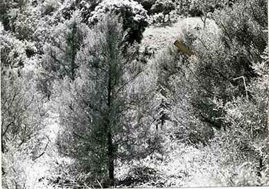 d_0005289_christmas_tree_farm.jpg