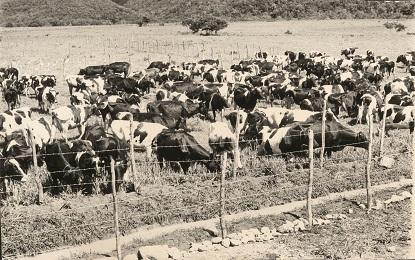 d_0008035_serge_island_dairy_farm.jpg