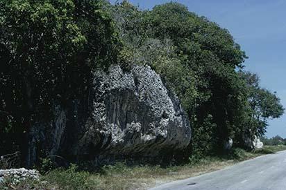 d_0007222_raised_coral_limestone_sea_cliffs_rio_bueno.jpg