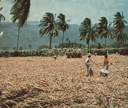 http://nlj.gov.jm/Digital-Images/d_0003756_plantation_sugar1.jpg