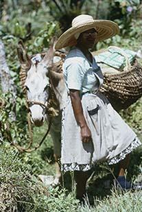 d_0007145_nwmarket_woman_donkey.jpg