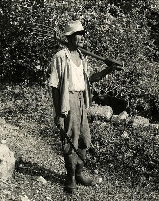 http://nlj.gov.jm/Digital-Images/d_0002939_small_farmer.jpg