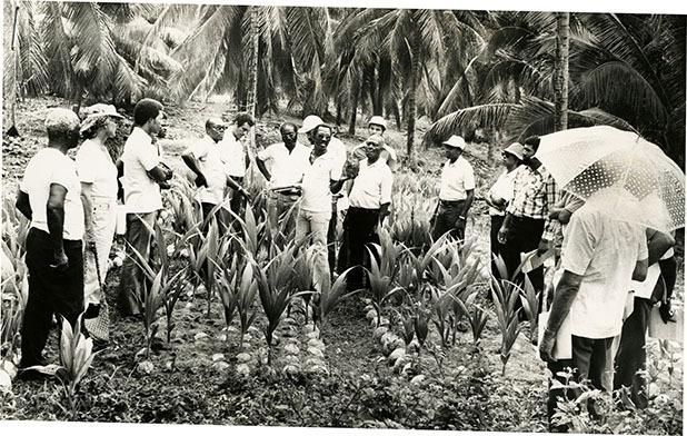 d_0007839_thomas_wilson_crop_agronomist_coconut_industry_board.jpg
