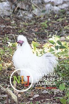d_0007708_chicken_minard_agricultural_show.JPG
