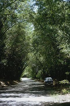 d_0006128_bamboo_avenue_st_elizabeth.jpg