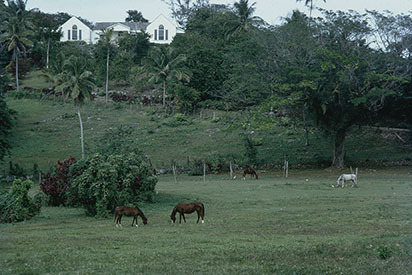 d_0006961_good_hope_trelawny_1971.jpg