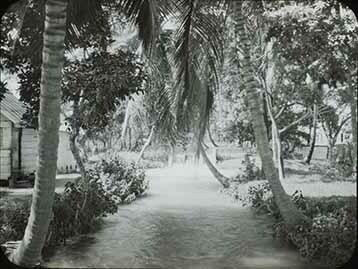 d_0005670_slide_60_trees_country_yard.jpg