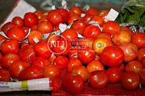 d_0004360_fresh_tomatoes_annotto_bay.JPG
