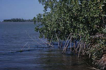 d_0007236_rock_bay_mangroves_falmouth.jpg