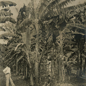 d_0007807_two_men_in_banana_plantation.jpg