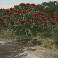 d_0005789_slide_82_poinsettia.jpg