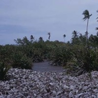 d_0006218_diseased_coconut_husks_runaway_bay.jpg