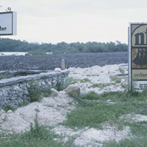 d_0007126_new_falmouth_mangrove_destruction.jpg