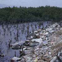 d_0006216_dawkins_pond_mangrove_destruction.jpg