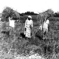 d_0004190_workers_threshing_grain.jpg