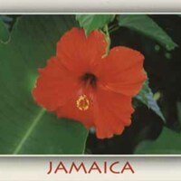 d_0005757_hibiscus_plant.jpg