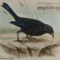 d_0004847_tinkling_blackbird_no_i.jpg