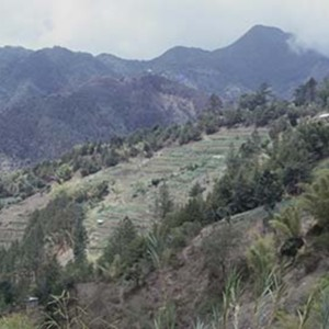 d_0007284_terraced_cultivation_blue_mountains_st_andrew.jpg