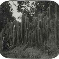 d_0005618_slide_5_cactus_hedge_ja_dildo.jpg