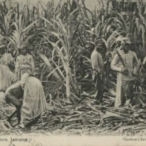 d_0006846_sugar_cane_cutters_jamaica.jpg