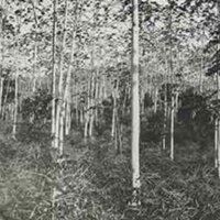 d_0005633_slide_21_coffee_plantation.jpg