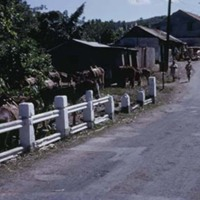 d_0006214_country_town_donkeys_clarendons.jpg