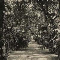 d_0005189_orchids_hope_gardens.jpg