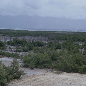 d_0007015_mangrove_swamp_near_edgewater_st_catherine_1975.jpg