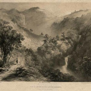 d_0007677_mount_moses_coffee_property.jpg