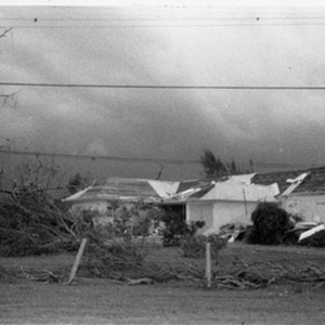 d_0007815_uwi_grounds_after_hurricane_gilbert.jpg