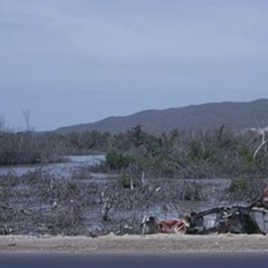 d_0006582_dawkins_pond_mangrove_destruction.jpg