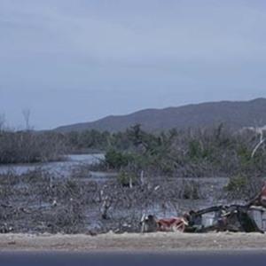 d_0006582_dawkins_pond_mangrove_destruction.jpg