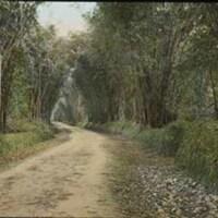 d_0005653_slide_43_lacovia_bamboo_walk.jpg