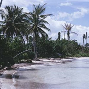 d_0006589_diseased_coconut_trees_runaway_bay.jpg